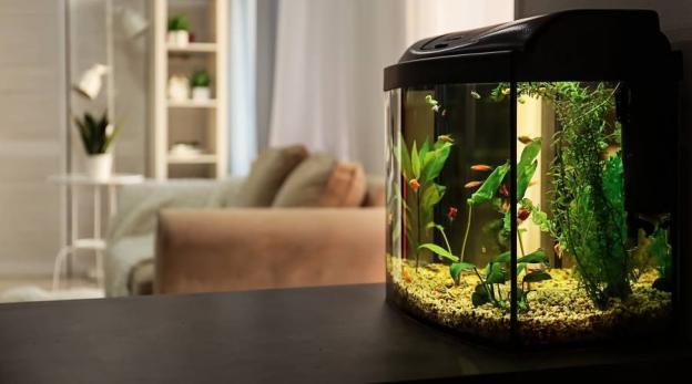 Welke verlichting kies ik voor mijn aquarium?